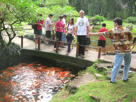 Byodo-In Temple: Feeding the colourful fish