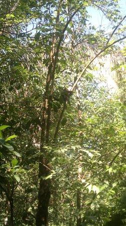 هوتل بلازا يارا:                   Naturaleza                 