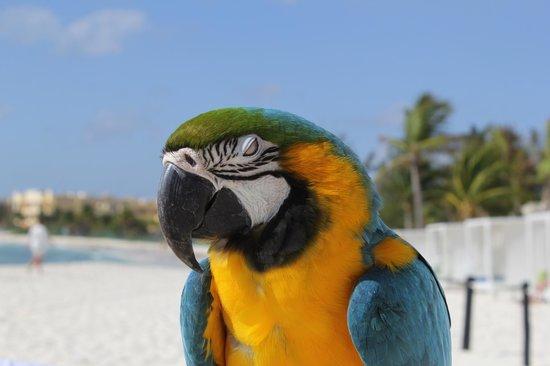 Sandos Caracol Eco Resort :                                     Bird on the beach