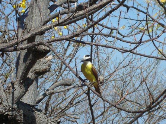 Four Seasons Resort Costa Rica at Peninsula Papagayo :                                     Wildlife