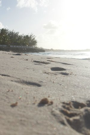 Bougainvillea Barbados:                   Footsteps in the sand