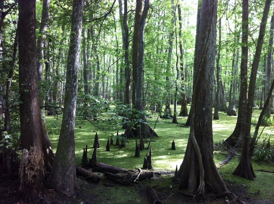 Abbeville, LA: Swamp area before curve to park.