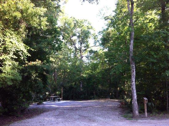 Palmetto Island State Park: Spot