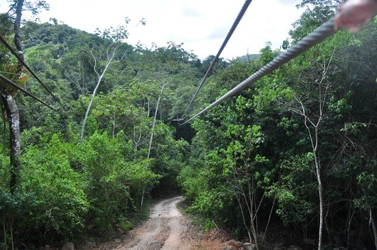 Calico Jack's Belize Jungle Canopy and Zip Lining:                   A view of the cables.  Getting ready!!!