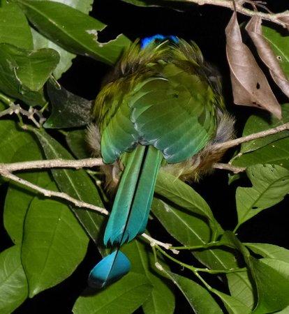 Guides of Monteverde:                   Sleeping bird