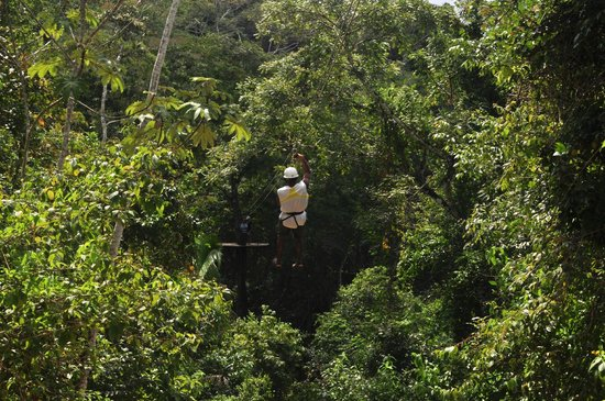 Calico Jack's Belize Jungle Canopy and Zip Lining:                   There zips away my Cousin's Husband