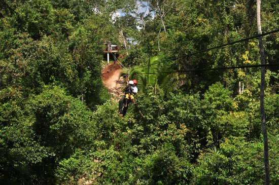 Calico Jack's Belize Jungle Canopy and Zip Lining:                   A guide with the baby in our group.