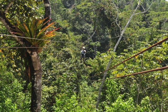 Calico Jack's Belize Jungle Canopy and Zip Lining:                   My Cousin's Husband on his approach