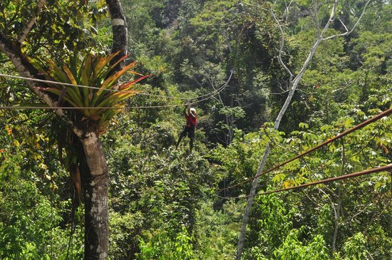 Calico Jack's Belize Jungle Canopy and Zip Lining 사진