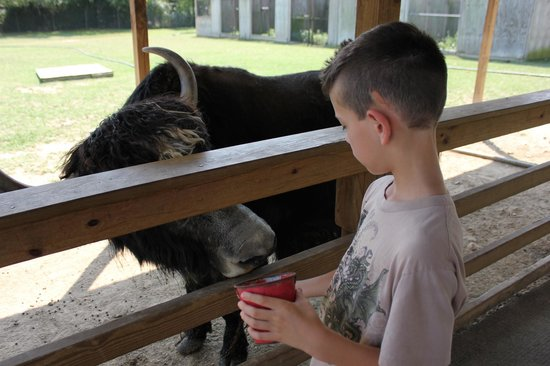 Luray Zoo - A Rescue Zoo: Petting zoo; the animals were friendly