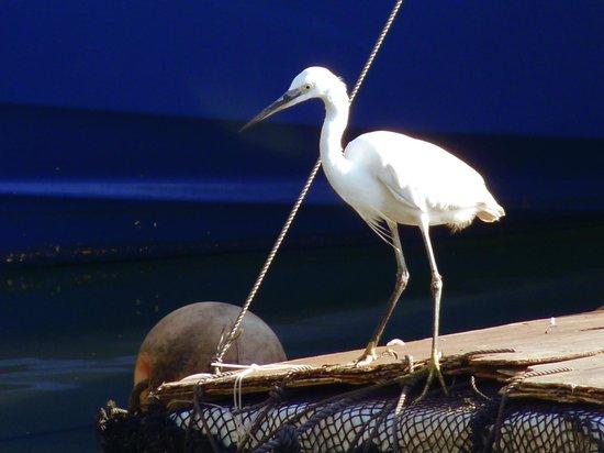 Cheung Chau Island:                   Egret