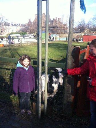 Gorgie City Farm: One of the Goats to pet