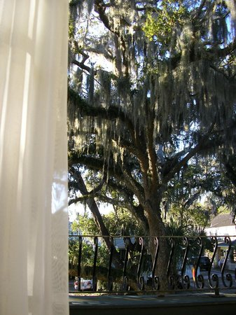 Coquina Inn B&B :                   A view out the Hibiscus patio/porch door