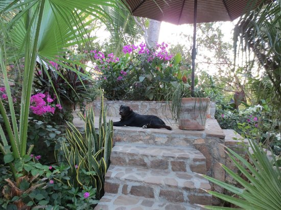 Casa Sol Zipolite:                                     Thelma overlooks the room