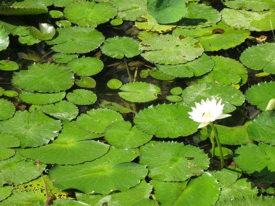 Green World Ecological Farm: Green World