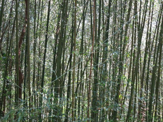 Green World Ecological Farm: Bamboo Forest