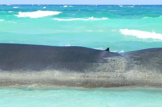 Grand Bahia Principe Coba:                   beautiful waves of clear blue water