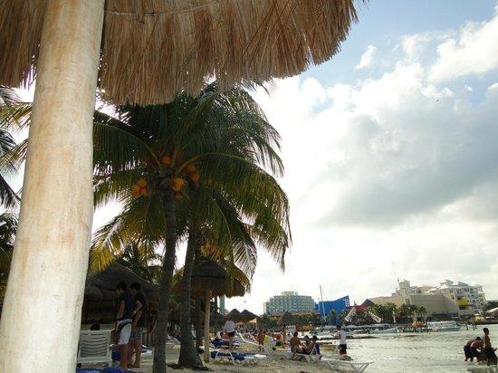 Oasis Palm:                   praia