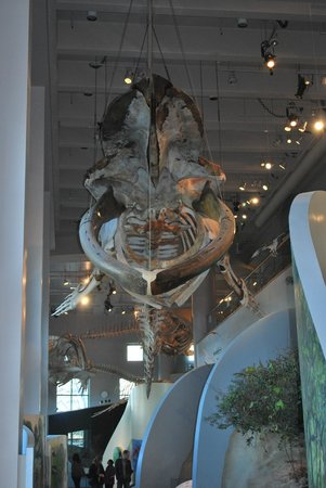 North Carolina Museum of Natural Sciences: Museum of Natural Sciences