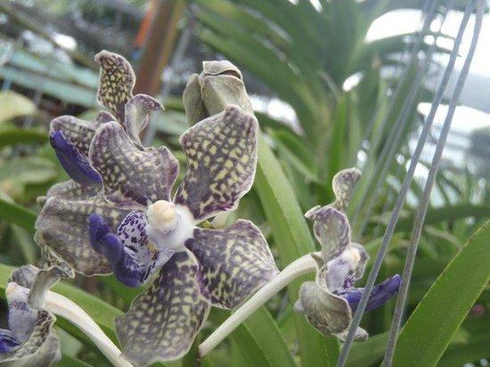 Phuket Orchid Farm : Pretty Flowers