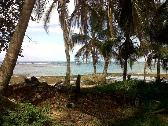 Camarona Caribbean Lodge :                   Playa Cocles