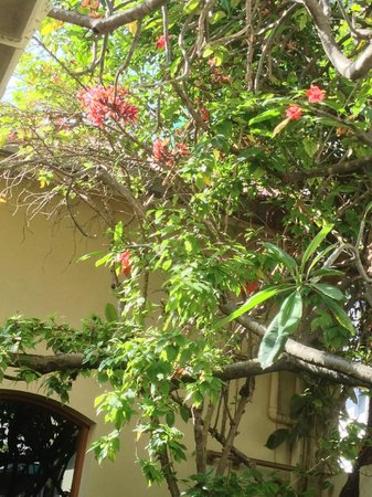Sala Boutique Hotel:                   Frangipani tree