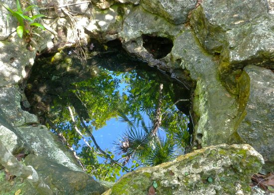 Bel Air Collection Xpu Ha Riviera Maya:                   Tiny cenote at the Botanical Garden