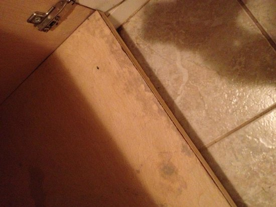 Highland Hills Motel & Cabins:                   Mold in cabinet