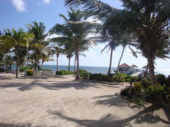 Belizean Shores Resort:                   How about this front yard