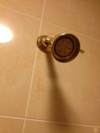 Harrah's Resort Atlantic City:                                     Shower head from 1998