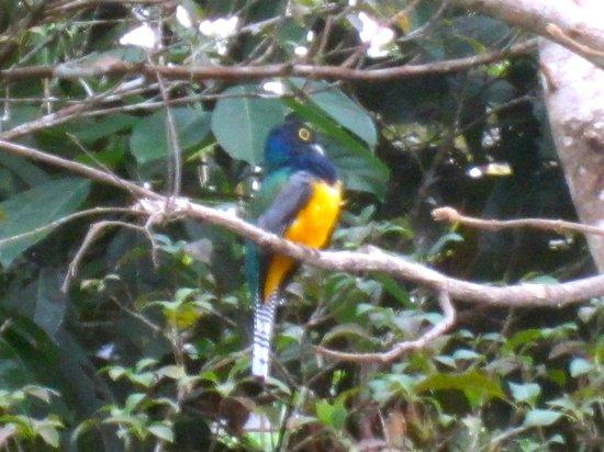 Gamboa Rainforest Resort : Bird Outside Room