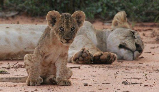 写真Porini Amboseli Camp枚