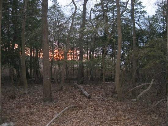 Cattus Island County Park: Upland Forest