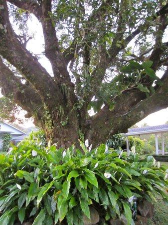 Hotel Panamonte: Garden at Inn