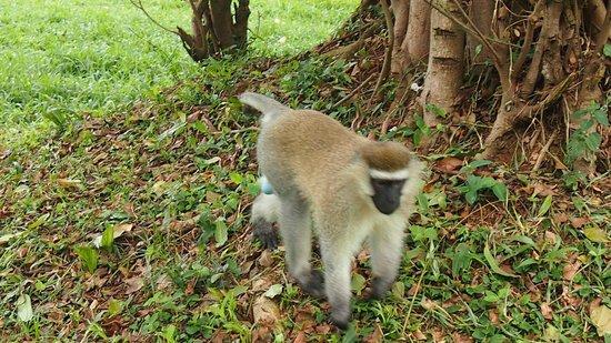 Entebbe Botanic Gardens