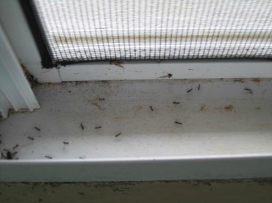 Paradise Cove Oceanfront Villas & Suites:                   Bugs everywhere!