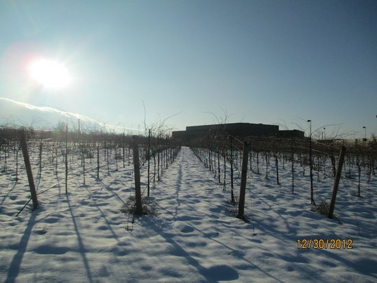 Prosser Vintner s Village: wineyard
