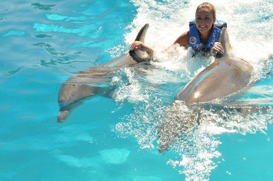 Aquaventuras Park:                   Dolphin rides