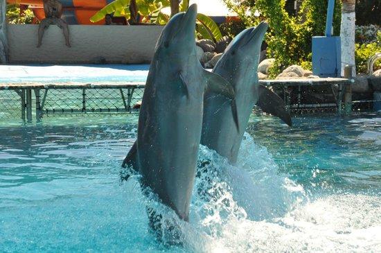 Aquaventuras Park:                   Dancing Dolphins