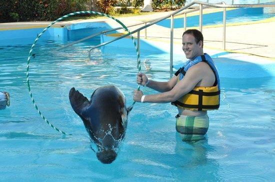 Aquaventuras Park:                   Sea Lion through a hoop!