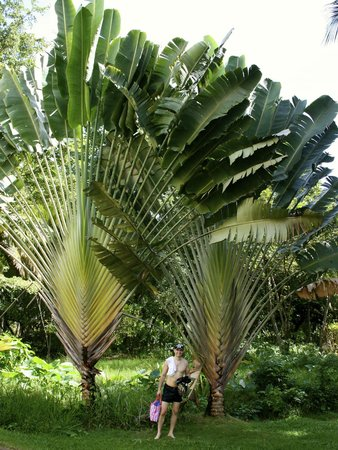 Grand Paradise Samana:                   Nice Plants