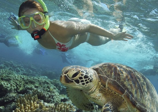 Central Plaza Port Douglas: Snorkling