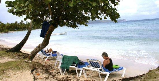 Grand Paradise Samana:                   The Beach