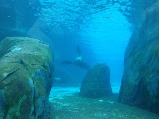 St. Louis Zoo:                   the Sea Lion tunnel