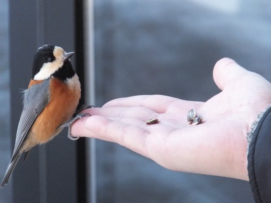 Ancient Hotel:                   清んだ空気に響き渡る小鳥のさえずりと、指先に感じる小鳥との一瞬のふれあいは、感動ですの一言です。