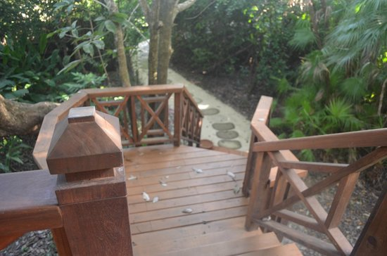 Hamanasi Adventure and Dive Resort:                   stairs up