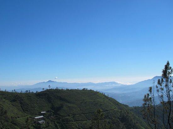 Hill Safari Eco Lodge Ohiya:                                     Another view