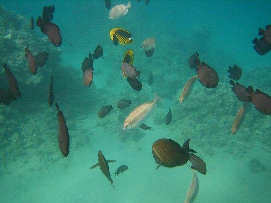 Tia Heights Makadi Bay:                   Snorkelling