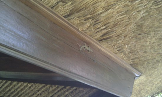 Hotel Tugu Bali :                   Lizard in bedroom