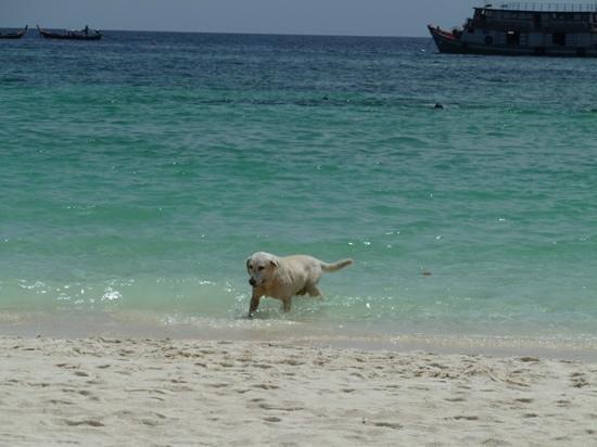 Mali Resort Pattaya Beach Koh Lipe:                   la mascota de Mali: Mali